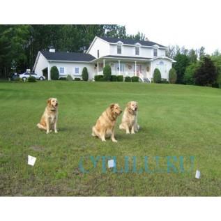 Невидимая электронная ограда для собак